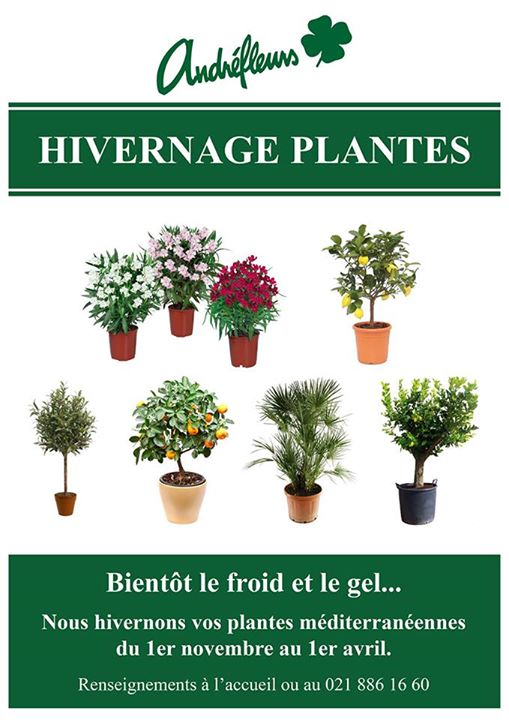 Hivernage de vos plantes