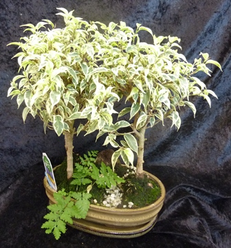 horticulture plantes d 39 int rieur garden center. Black Bedroom Furniture Sets. Home Design Ideas